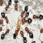 Ant Pest Control in Alton Priors 2