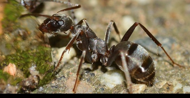 Ant Infestation in County Durham