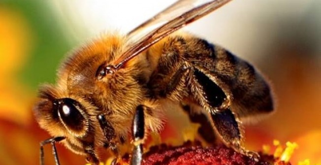 Bee Extermination Services in Scottish Borders