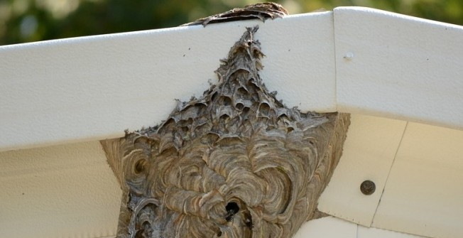 Bee Nest Removal in Scottish Borders