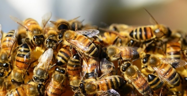 Bee Infestation in Scottish Borders