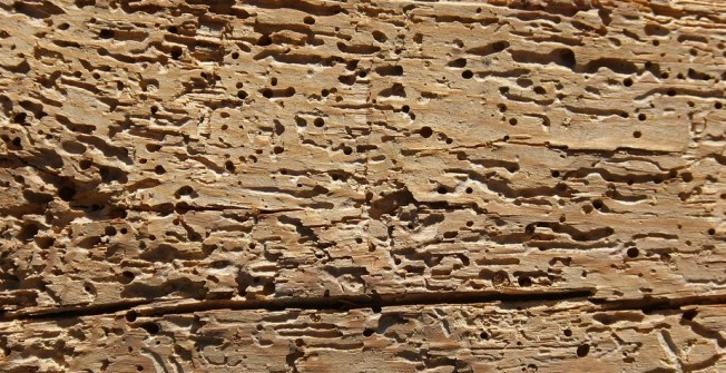 Cost of Woodworm Treatment in Nethermuir